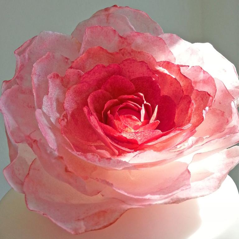 fuschiaricepaperflower